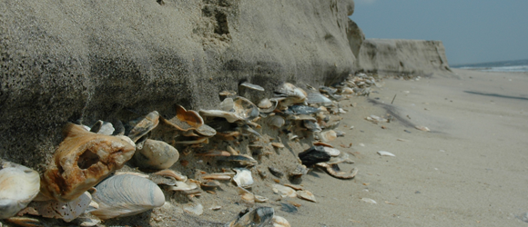 https://www.hotelcapecharles.com/wp/wp-content/uploads/2013/06/barrier-island-shells_580x250.png
